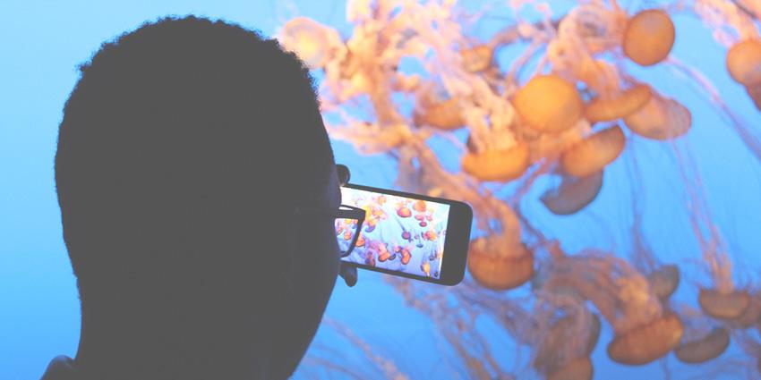 Prendre des photos sous l'eau avec son iPhone